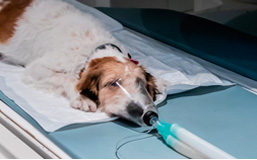 Anestesia – Analgesia