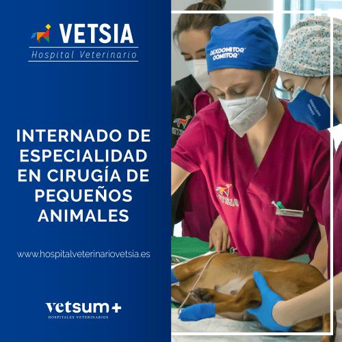 Internado de especialidad en Cirugía de pequeños animales en el Hospital Veterinario VETSIA