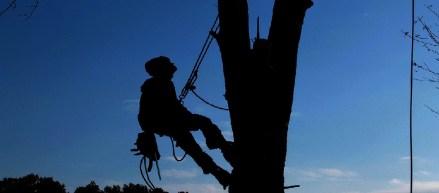 Man on the tree