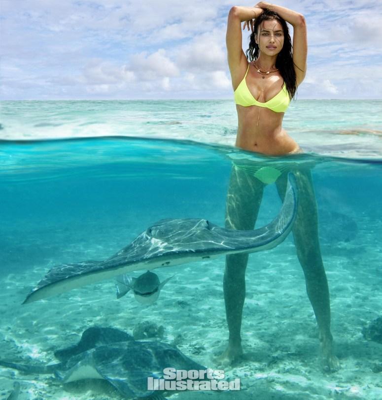 Desktop shark