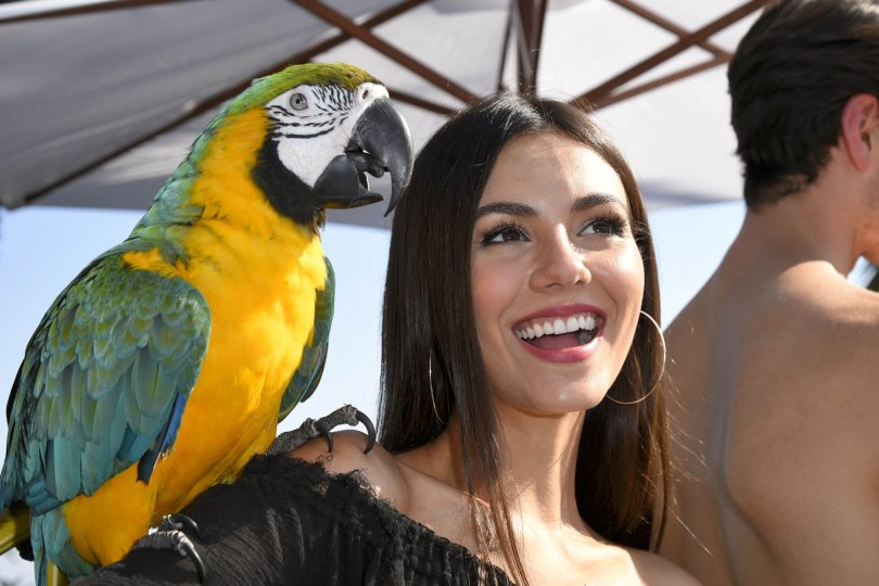 Victoria Justice Sexy | Hot Celebs Home