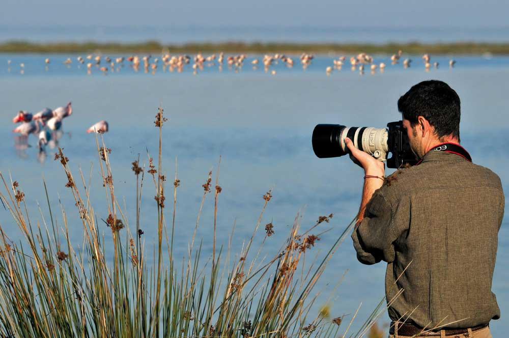 Birdwatching: Birdwatching Delta del Po | Hotel Milan