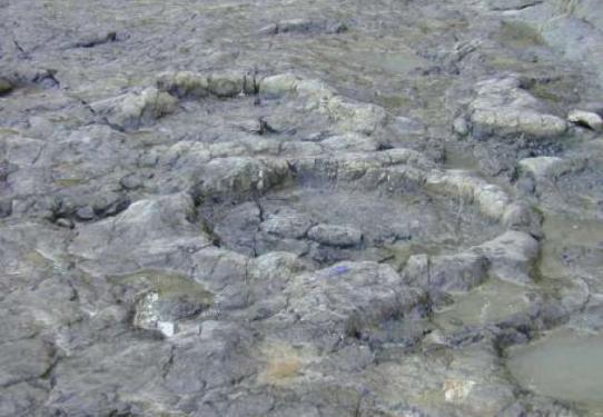 Resultado de imagen de huellas de dinosaurio ribadesella