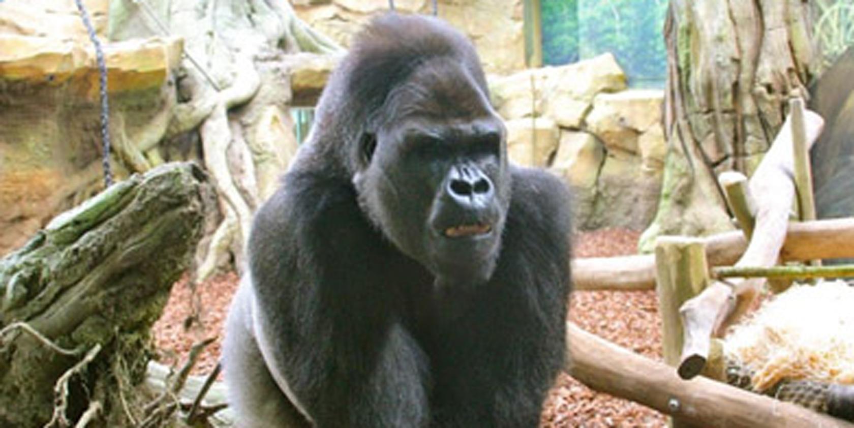 Sjour Safari Au Zoo DAmnville Accueil Htels Amnville