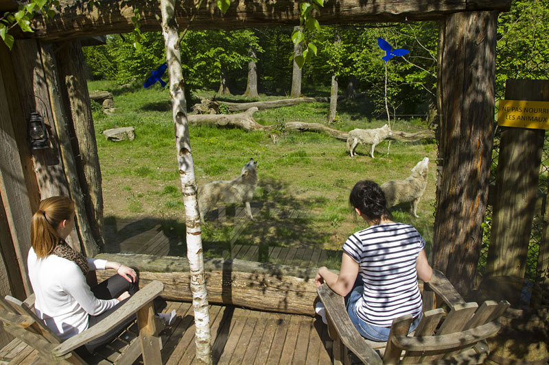 Dormir avec les loups  Parc animalier de SainteCroix  Hotelsinsolitescom