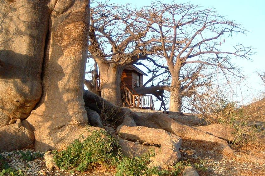 Lodge des Collines de Niassam  Lodge dans les arbres au Sngal