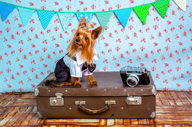 Dressed up dog and old film camera sit on top of old-fashioned leather suitcase against a sequenced wallpaper backdrop.