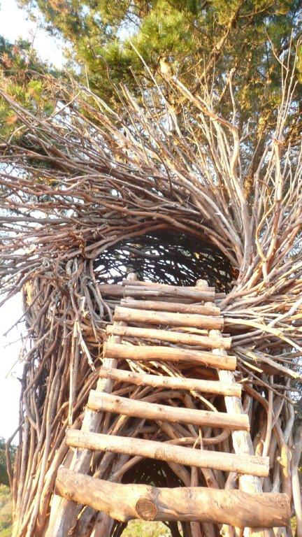 Wooden stairs leading to a lodging nest made of tree branches, fittingly, at Treebones Resort in Big Sur, California.