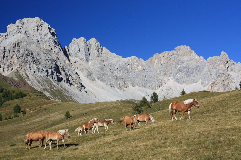 Offerta settembre sulle Dolomiti a Falcade  Hotel Stella Alpina