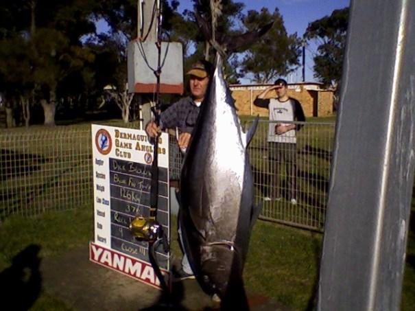 Barrel Bluefin