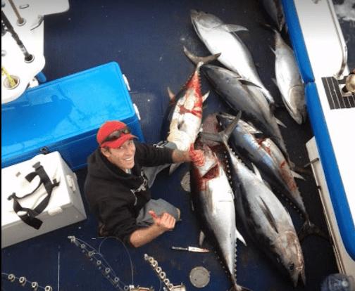 school bluefin