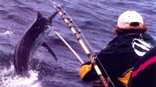 500 lbs black marlin bermagui 12 mile reef