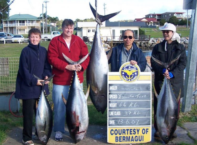 yellowfin upto 60kg