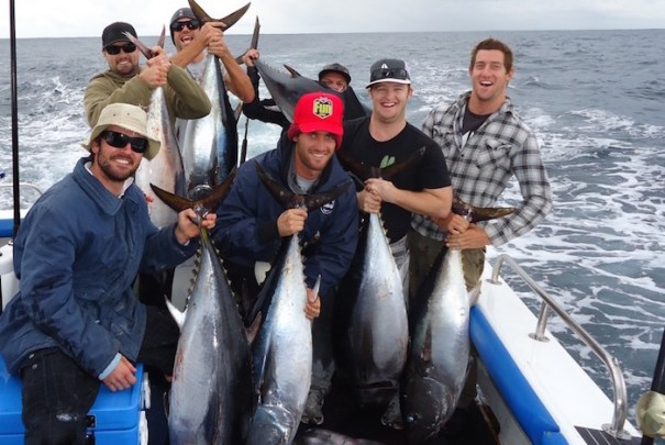bunch of school bluefin tuna