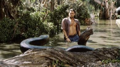 Photo of Anaconda Reboot Is In The Works At Columbia Pictures