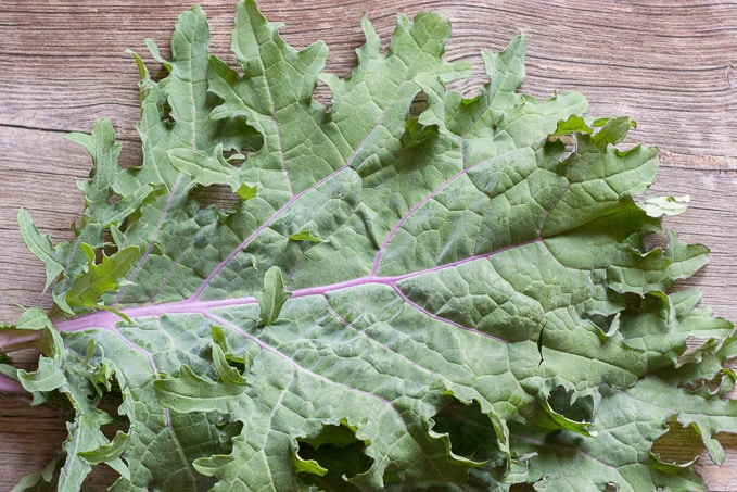 red russian kale for a breakfast frittata