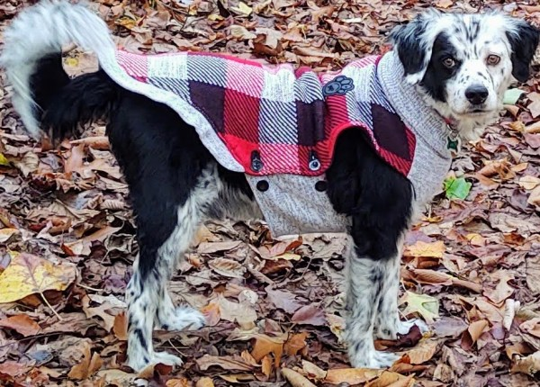 Dog in a checked sweater