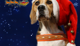 Christmaspersona