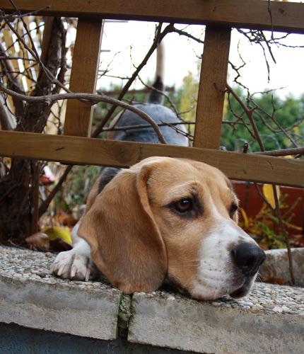 oje, der Rest vom Beagle passt nicht durch...
