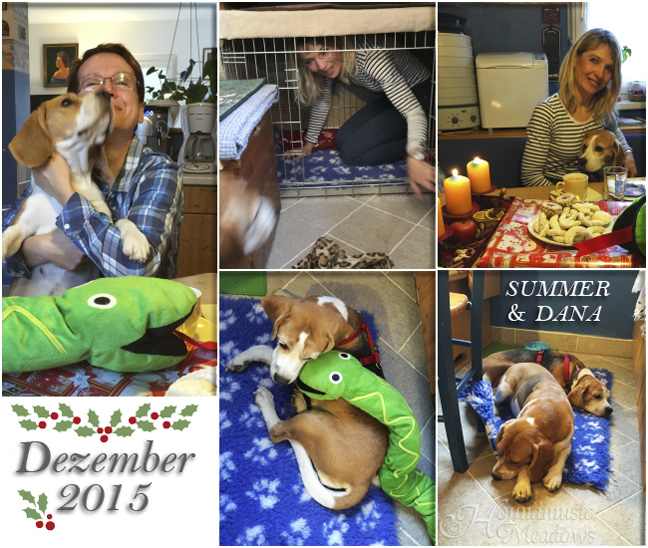 Weihnachtsfeier mit Beagle Summer & Frauchen