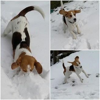 Schneeeeee yeah!!!!