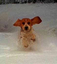 Jippiyeeh! Schnee!!! Winter 2018