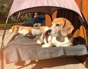 Sonnenbad im Garten