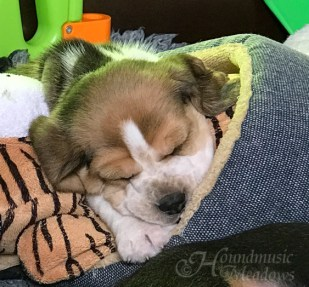 kleine Schlafmütze