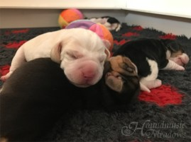 Beaglebruder-Polster