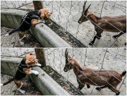 Mutiges Flirten im Tierpark Haag