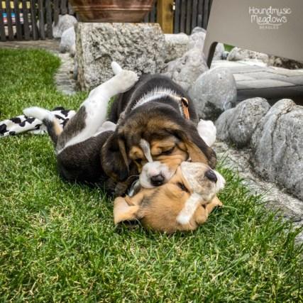 Daisy & Cody, Tag 31
