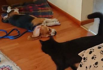 Katze im Haus...