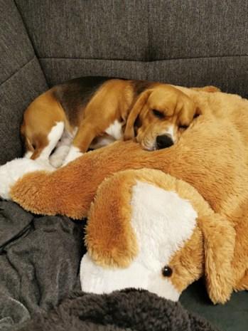 Caruso und sein Lieblings-Stoffhunderl.