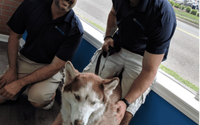 Hounds Town USA – A Safe Haven for Dogs in Need