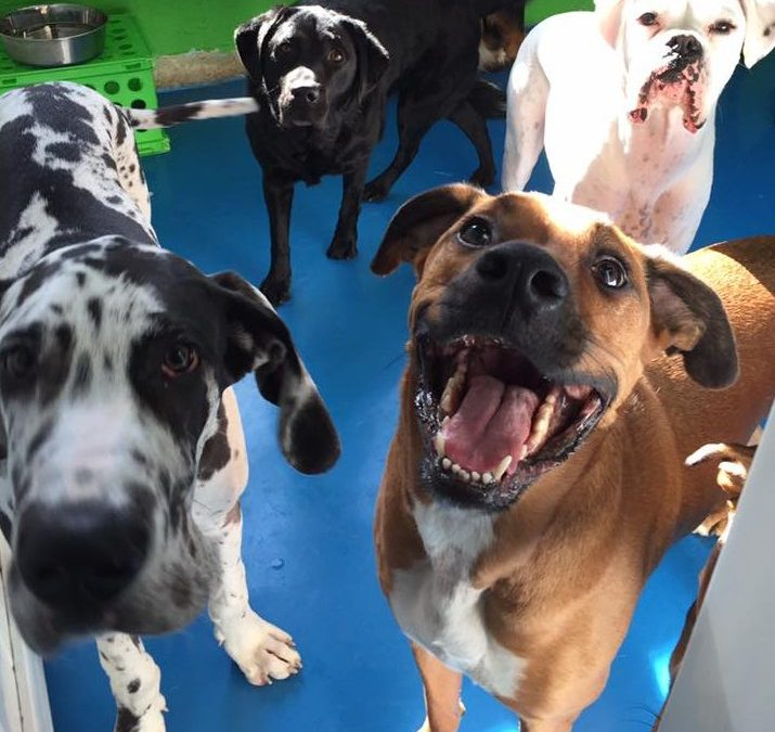 Opening a Doggie Daycare from Scratch? Read These Tips!