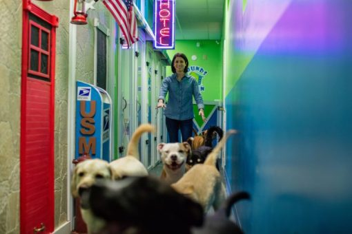 Hounds Town USA Looks to Continue Growth Momentum