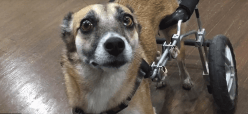 Doggie Day Care Franchise Rescues Disabled Dog