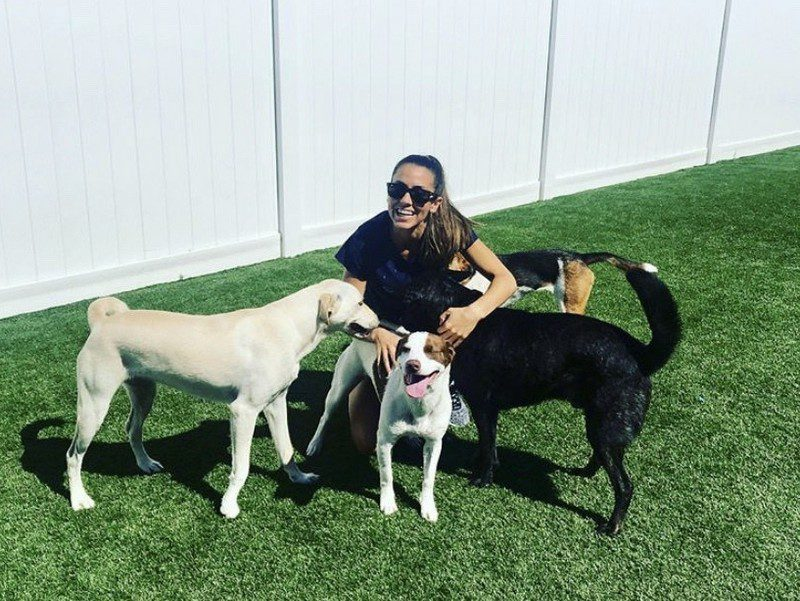 dog daycare franchise - island park - hounds town