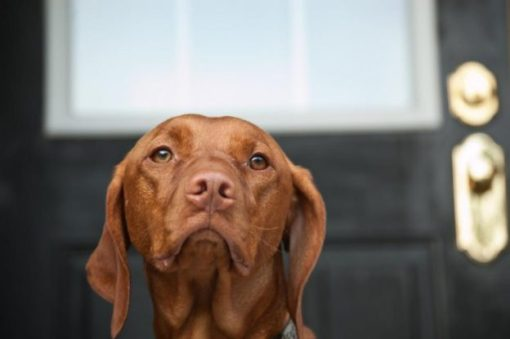 Should You Open a Doggie Daycare With Dogtopia?