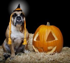 Halloween pet industry