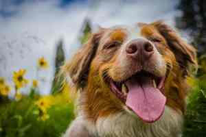 Open a doggie daycare with Hounds Town USA