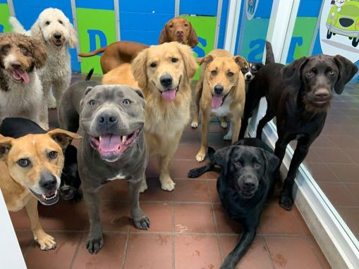 "Pittsburgh Doggy Daycare Is the ""Place for Dogs to be Dogs"""