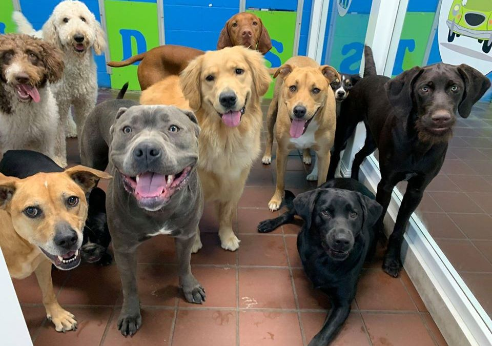 """Pittsburgh Doggy Daycare Is the """"Place for Dogs to be Dogs"""""""