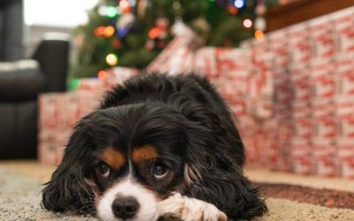Holiday Safety Tips from Hounds Town USA