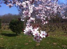 Fleur Hourbanon 1