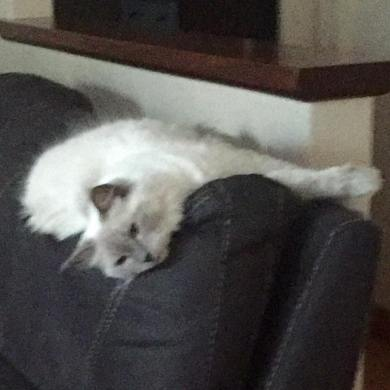 Cat on lounge