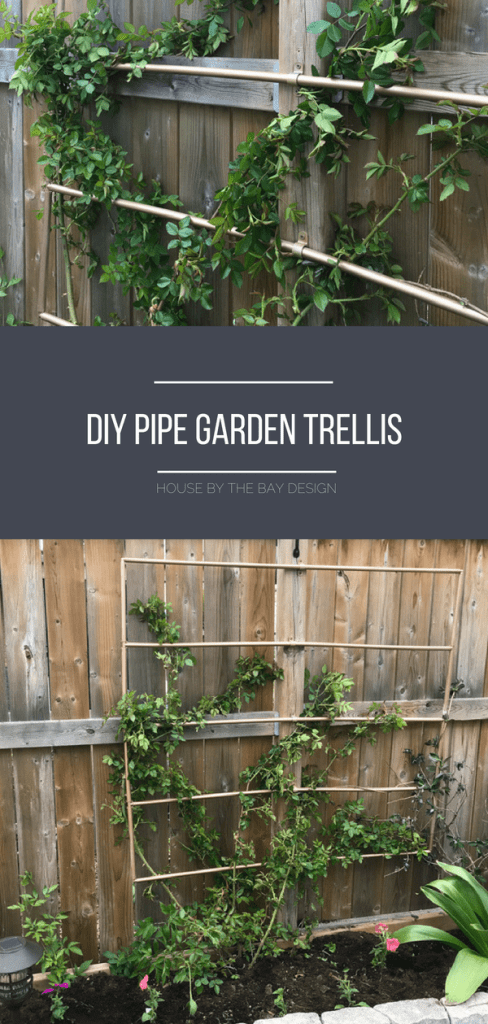diy-pipe-trellis-p