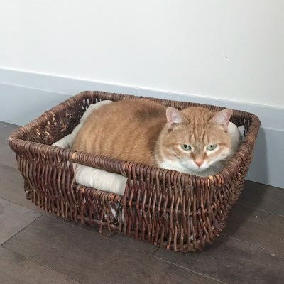 DIY Basket Cat Bed: Thrift Store Upcycle Challenge