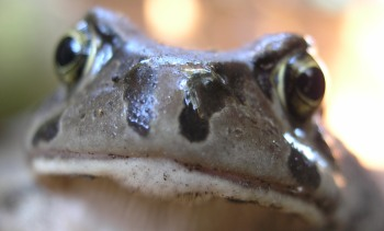 How To Get Rid Of Frogs In Backyard getting rid of frogs - make a good house a great home
