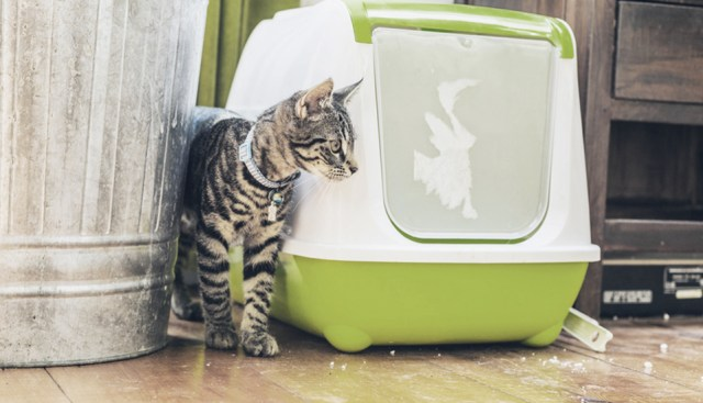 diy pet stain remover